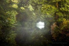 Tunnel (shaun.argent) Tags: ripon reflections riponcanal trees tree texture nature woodland woods water shaunargent seasons autumn