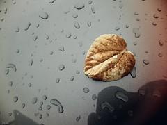 Blatt (Peter Schler) Tags: blatt leaf herbst auto flickr peterpe1