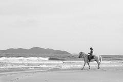 Balnerio dos Aores (cacoshs) Tags: florianpolis brasil brazil santa catarina ilha aores praia balnerio cavalo horse cavallo playa beach spiaggia plage cheval