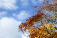 Autumn Sky (jillyspoon) Tags: autumn harrogate bluesky northyorkshire aurorahdr lightroom canon1755mm canon70d canon70d1755mm