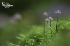 Serenity (Lonely Soul Design) Tags: mushroom fall autumn macro forest rainy day moss fungus