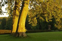 La Hulpe (Natali Antonovich) Tags: lahulpe park autumn pensiveautumn nature belgium belgique belgie light