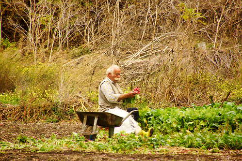 DSC03509 Old man and the radish field.