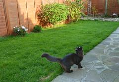Come to me, birdie! (Caulker) Tags: cat kitten garden october 2016