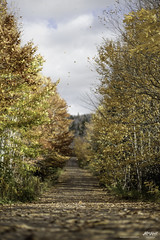 windy autumn day (Rob Romard) Tags: wind leaves falling road dirt country autumn capebreton