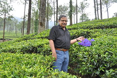 The flowers placed there by my guide makes it look rather goofy! (oldandsolo) Tags: kerala india godsowncountry vagamon vagamonhills idukkidistrict munnarteagardens munnarteaestate vagamonmunnarteagardens teaplantation hillscenery nature photography takingpictures agriculture teacultivation teabushes teaestate teagarden