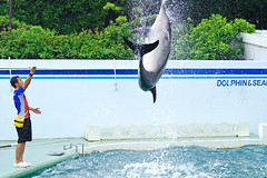 Jump! At Shinagawa Aquarium Dolphin Show :  (Dakiny) Tags: japan tokyo shinagawa shinagawaku katsushima outdoor city street sport park shinagawakuminpark aquarium shinagawaaquarium dolphinshow people man guy portrait creature animal mammal seacreature dolphin bottlenosedolphin nikon d7000 tamron 70300mm sp70300mmf456divcusd a005 modela005 nikonclubit
