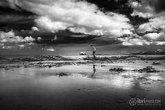 North Berwick - Bass Rock - 06.jpg (ibriphotos) Tags: blackandwhite northberwick gannet beach bass eastlothian seabird break friends polariser riverforth polarizer firthofforth daytrip weekend caravan