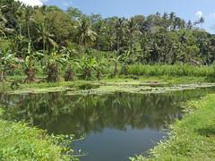 DSC05302.jpg (J0celyn79) Tags: asie bali indonésie karangasem id