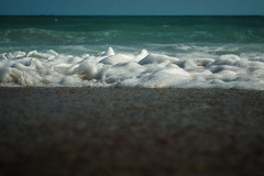 Sea Foam (CollectingImages2015) Tags: froth foam surf water ocean sea seafroth seafoam