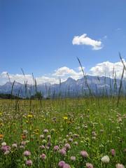 Blumenwiese im Gadertal (dietmar.schuler) Tags: gadertal tia vaciara