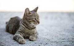kittens (19) (Vlado Fereni) Tags: kitty kittens animals cats catsdogs zagorje hrvatskozagorje nikkor8020028 nikond600 animalplanet