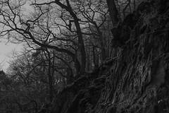 Dark Arms (Netsrak) Tags: spay rheinlandpfalz deutschland de tree trees baum bume stein steine fels felsen rock rocks ast ste branch branches