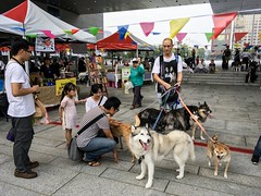 2016  Lets go Supporting-33 (Enix Xie) Tags: 2016letsgosupporting taiwan taichung travel trip journey life enjoy streetsnap street people music singer guitar photographers girl dog husky rabbit nikon nikond7000 d7000  70200 70200f4 nikonafsnikkor70200mmf4gedvrappleipadipad pro 97 support cute pet building backpacker animal snake lectures learn learning study dance dancer child children