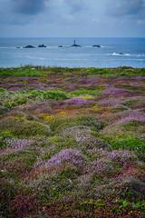 Natures Carpet (Nick.Richards) Tags: landscape landsend cornwall sea lighthouse rocks moss fern nikon nikon1685 nickrichards nikond7100 nikefex d7100 lightroom hdr hdrefex