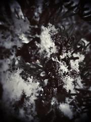14440613_1112198865532781_7484554626047962879_n (dragica_basaric) Tags: winter snow wonderland magic magical snowy flake nature green colours streets treet postcar postcards love train phot january 03 2016 photo photography d b danchy92 dragicabasaric lapovo serbia srbija srb sumadija dbphotography