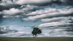 the Chisbury tree and clouds (HHH Honey) Tags: minolta100200mm sonya7rii landscape september tree wiltshire chisbury clouds cloudscape googlenikcollection analog