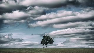 the Chisbury tree and clouds