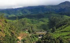 Munnar 061215 (6) (Richard Collier - Wildlife and Travel Photography) Tags: india kerala munnar landscape