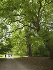 Westonbirt Arboretum (Nigel Musgrove-1.5 million views-thank you!) Tags: westonbirt arboretum trees green autumn colours