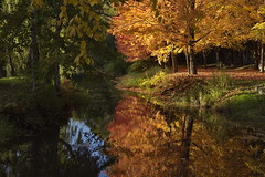 Alle du moulin (Luc Marc) Tags: arbre automne autumn couleur orange paysage pond sitehistorique tree tannoncour patrimoine temps troisrivires tang qubec