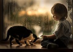 one year later (iwona_podlasinska) Tags: cat child boy window rain