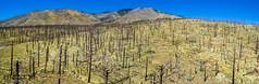 DJI_0004-Pano (Greg Meyer MD(H)) Tags: deadtrees drone shultzpassroad flagstaff arizona unitedstates us