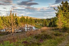 Evening Sun on Distant Boathouse (Geoff France) Tags: loch an dava davamoor water trees landscape scottishlandscape highlands scottishhighlands cairngorms cairngormsnationalpark