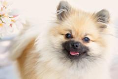 en los ojos del perrete (antonio f. martinez) Tags: perro dog color