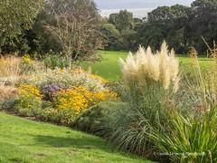 Clyne Gardens 2016 09 30 #15 (Gareth Lovering Photography 3,000,594 views.) Tags: clyne gardens botanical swansea wales flowers trees shrubs park olympus stylus1s garethloveringphotography
