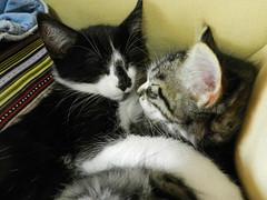 Nap Time (Alien Encounter) Tags: sleep sleepy kitty kitties kitten kittens fluffy soft nikon coolpix p500 animal animals feline