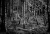 Straight. (slivinska) Tags: tree forest straight landscape blackandwhite bw nature canon helios creepy dark monochrome outdoor