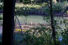 DSC05271 (Capt Kodak) Tags: autumn brantacanadensis canadagoose chattahoocheerivernationalrecreationarea fall medlockbridgepark nationalparkservice
