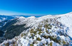 Harry_30978,,,,,,,,,,,,,,,,,,,Winter,Snow,Hehuan Mountain,Taroko National Park,National Park (HarryTaiwan) Tags:                   winter snow hehuanmountain tarokonationalpark nationalpark     harryhuang   taiwan nikon d800 hgf78354ms35hinetnet adobergb  nantou mountain