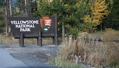 Welcome! (A Wild Western Heart) Tags: muledeer doe yellowstone nationalpark autumn fall vacation centennial
