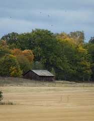 tree on field (dovlindphoto) Tags: autumn fall sweden dovlind dovlindphoto pentax k3 colors landscape nature bw