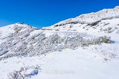 Harry_30971a,,,,,,,,,,,,,,,,,Winter,Snow,Hehuan Mountain,Taroko National Park,National Park (HarryTaiwan) Tags:                 winter snow hehuanmountain tarokonationalpark nationalpark     harryhuang   taiwan nikon d800 hgf78354ms35hinetnet adobergb  nantou mountain