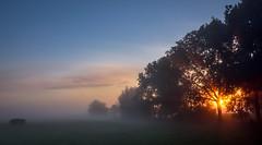 Fall sunrise Holland (martijnvdvelden) Tags: fall holland netherlands sun sunrise trees fogg mist bomen zon zonsopkomst herfst nederland platteland countryside