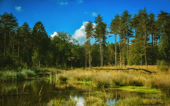 Walk-2153-4 (EbE_inspiration) Tags: outdoor pool water trees outside landscape nikon nature d7100