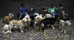 Canine Meetup (Joe Josephs: 2,861,655 views - thank you) Tags: joejosephsphotography joejosephs nyc newyorkcity travelphotography travel photojournalism fineartphotography fineartprints pets dogs centralpark centralparknewyork