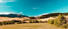 In Bozeman, Montana. (The Sergeant AGS (A city guy)) Tags: montana southwestern unitedstates exploration countryside walking trail trees blue skies sony slra850 minoltamaxxumlens