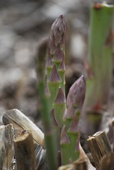 asparagus (trish.brewer) Tags: nature indianapolis ima