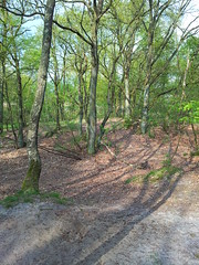 20130505_172318 (MelisaTG) Tags: cameraphone trees woods urbanwoods greenleafs