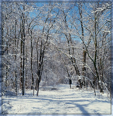 """Winter Trail Morning"" (Wolverine09J ~ 1 Million + Views) Tags: minnesota amazingnature snowscapes awesomenature wintertrails moonseclipse simplysuperb forestwandernaturephotographyexcellence naturesphotos naturescreations challengeclub naturesprime shieldofexcellencelevel1 loversoflandscapes level1autofocus level2autofocus thelooklevel1red niceasitgets~level1 level3autofocusred musictomyeyes~l1"
