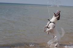 Thirst (Ell@neese) Tags: dog pet cute water animal fun 50mm jump pentax air catch kr moment