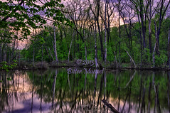 Wetlands Sunset (bittermuppet) Tags: pink trees sunset sky reflection nature water clouds forest woods nikon purple wetlands pinksky hdr highdynamicrange waterreflection d800 purplesky metroparks nikkorlens bittermuppet nikond800 28300nikkorlens ©2013bittermuppet