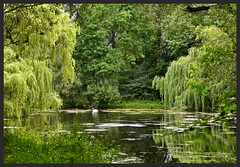 Coolness from the sunshine (Englepip) Tags: green water serene pond outdoor trees bird swan reflections cool odham hampshire