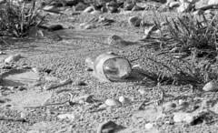 no message in a bottle (Ioannis the graecum) Tags: canon a1 fomapan 100 bonn rhine rhein rheinland fd lens 135mm f28 epsonscan v850 pro