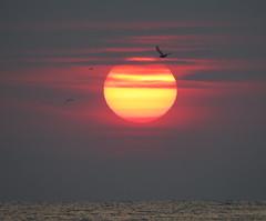 IMG_0038y (gzammarchi) Tags: italia paesaggio natura mare ravenna lidodidante alba sole nuvola animale uccello gabbiano volo stormo