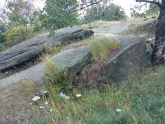 Strzelin granite quarry (nesihonsu) Tags: geology geologia geologiapolski wzgrzaniemczaskostrzeliskie strzelin wzgrzastrzeliskie poland polska przedgrzesudeckie przyrodapolska sudeticforeland quarry kamienioom granite granit dolnolskie dolnylsk lowersilesia geotourism rocks rock skaa skay skalne